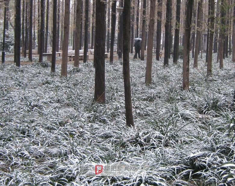 2016.第一场雪9.jpg