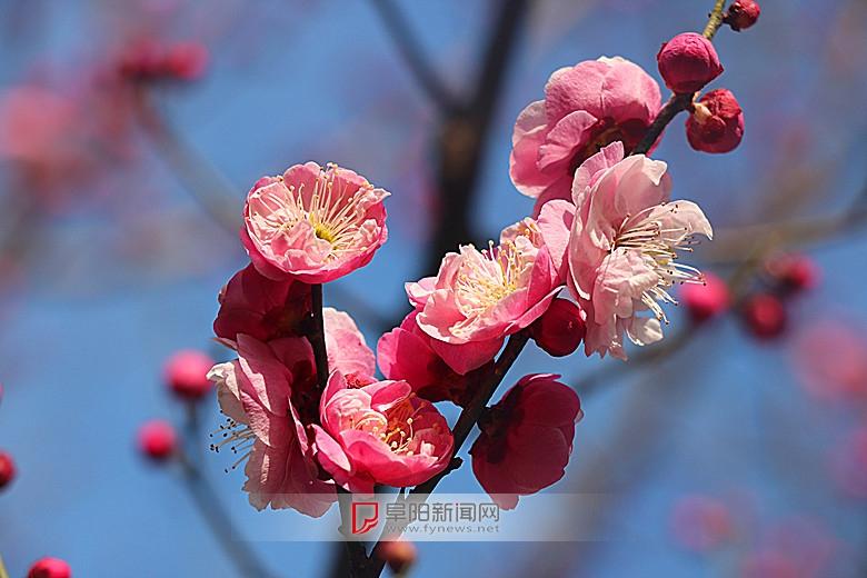 红梅花儿开3.jpg
