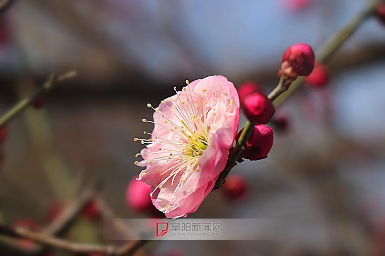 红梅花儿开5.jpg