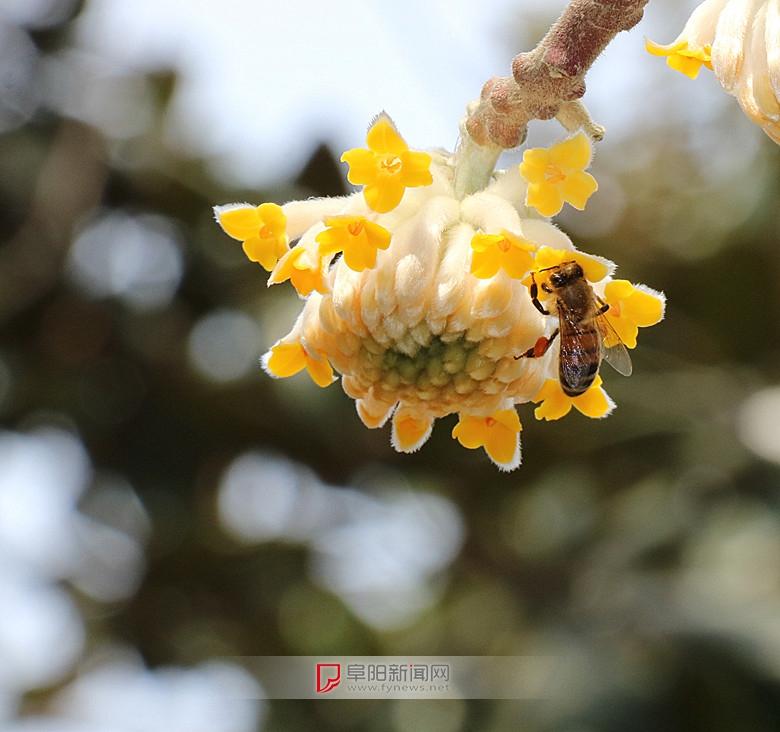蜂恋花4.jpg