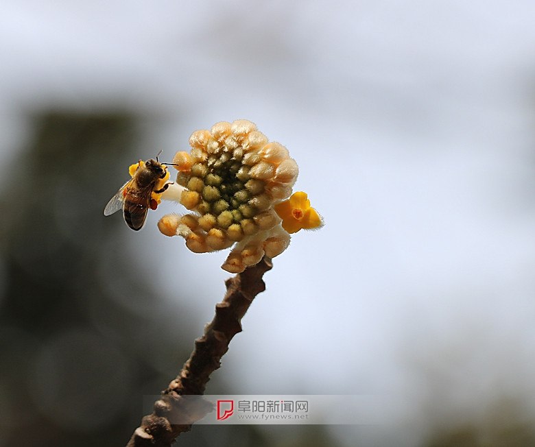 蜂恋花3.jpg
