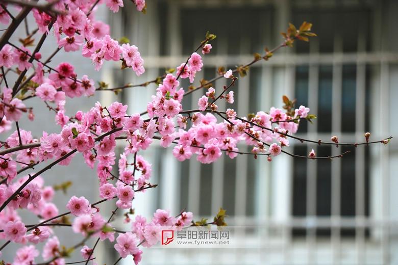 窗外的春光1.jpg