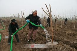 建设花木种植基地带动群众增收