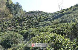 传统古村落,黄山茶园坪