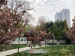 文峰公园防疫宣传横幅 2