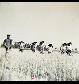 1958年下放张村铺劳动
