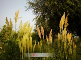 湿地公园风光