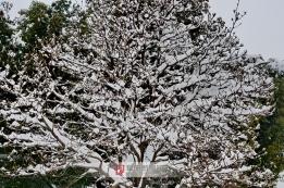 阜南首场雪