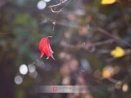 寒风中的那抹红