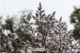 雪中姿态~记2018首场雪