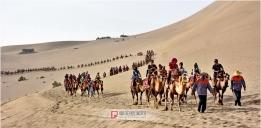 响沙山骆驼队