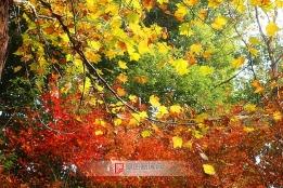 五彩斑斓的秋天
