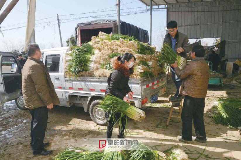 短短两天,吕寨大葱已售20万余斤